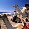 Египет из казани