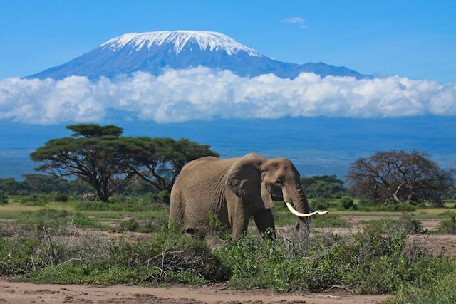 кения большое сафари