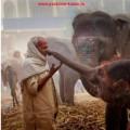 индия из казани горящий тур